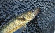 Minnesota Top Five Fishing Lakes