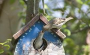 How to Make a Sparrow Trap