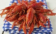 Crawfish Bag Limits in Florida