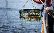 Crab Fishing in Washington State