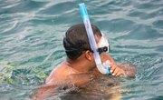 Snorkeling in Marco Island, Florida