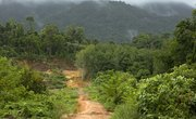 Trees of Tropical Rainforests