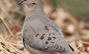 How to Feed Wild Birds and Doves