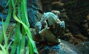 How Do Seahorses Breathe?