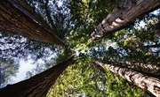 What Kind of Biome Is Redwood National Park In?