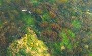 Similarities Between Fungi & Algae