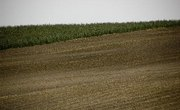 Inorganic & Organic Components in Soil