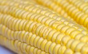 What Is Roundup Ready Corn?