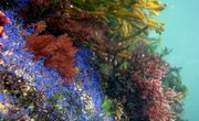 What Plants Live in the Deep Ocean?