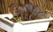 Bird Feeders & Rats
