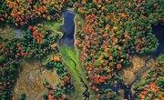 Ecosystem of Wetlands