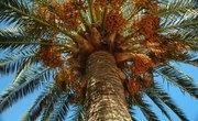 How to Make a Classroom Palm Tree