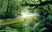 Facts About Tropical Rainforest Plants