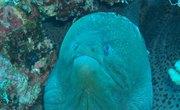 What Type of Ocean Zone Do Eels Live In?