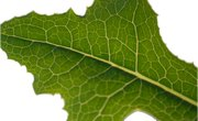 Importance of Pigments in Photosynthesis