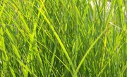 Grass Growth Science Project