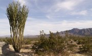 Interesting Facts About Desert Plants