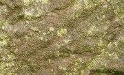 Structural Characteristics of Blue-Green Algae
