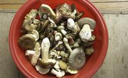 How to Identify Wild Mushrooms in North Carolina