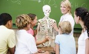 What Are the Five Main Functions of the Skeletal System?