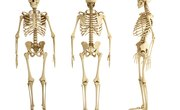 Why Are Bones Important to the Body?