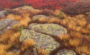 How Do Lichens Adapt to the Temperate Forest?