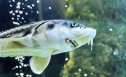 List of Fish That Are Bottom Feeders