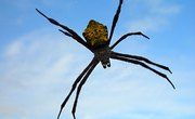 Poisonous Spiders in the Northeast