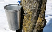 Homemade Maple Syrup Taps