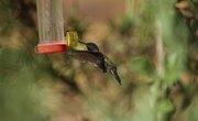 How to Keep Birds Away From the Hummingbird Feeder
