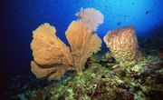 How Do Sponges Breath?
