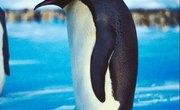 How Do Emperor Penguins Defend Themselves?