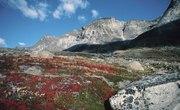 The Biotic Factors for Alpine Tundra