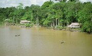 What Are the Resources of the Amazon Rainforest?