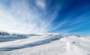 About Plant Life in the Polar Regions