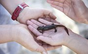 Facts on Newts for Kids
