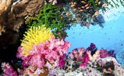 Plants & Animals in the Pacific