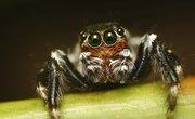 How Do Spiders Breathe?