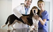 What Math Courses Are Needed in College to Be a Veterinarian?