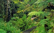Environmental Problems Caused by Deforestation of Tropical Rain Forests