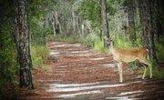 Animals Native to the State of North Carolina