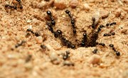 Insects That Live Underground