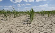 The Effects of Drought on Farmers