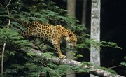 Animals in the Tropical Rainforest Food Chain