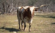 How to Build a Working Cattle Pen & Chute for Longhorns