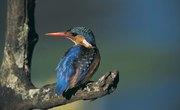What Do Wild Birds Eat?