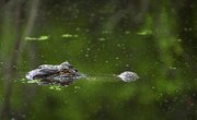 Ecosystem Diversity in Louisiana