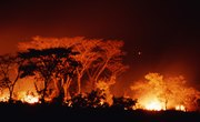 What Would Happen if a Forest Fire Destroyed an Ecosystem?