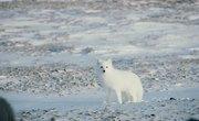 Animals of Cold Desert Biomes