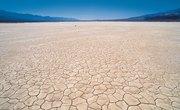 Gobi Desert Ecosystem